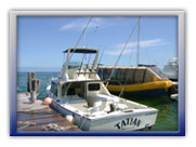 Deep Sea Cancun Fishing Trips